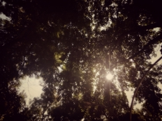 esdiverde